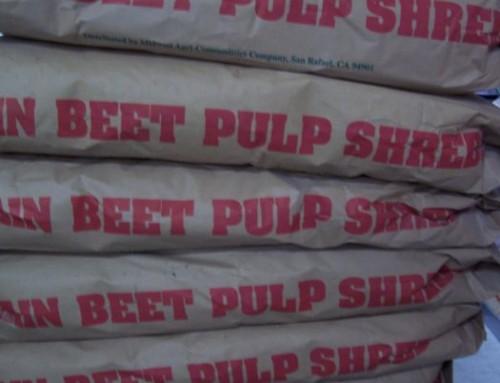 Feed – Beet Pulp