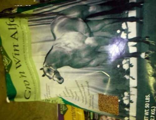 Feed – Buckeye Gro 'n Win Alfalfa